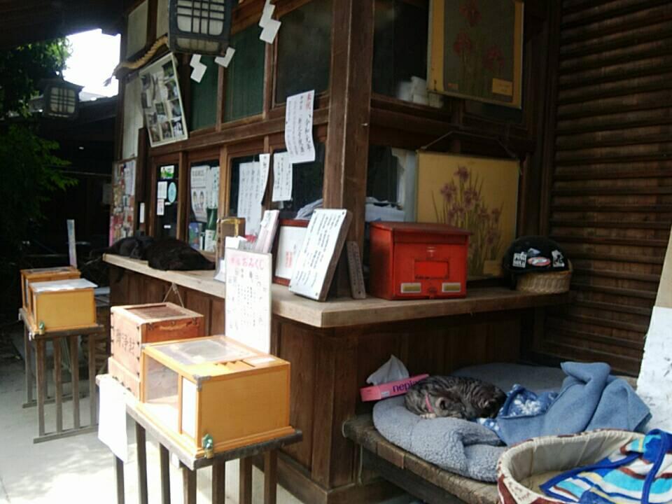 梅宮大社の猫たち - Cats of Umenomiya grand shrine